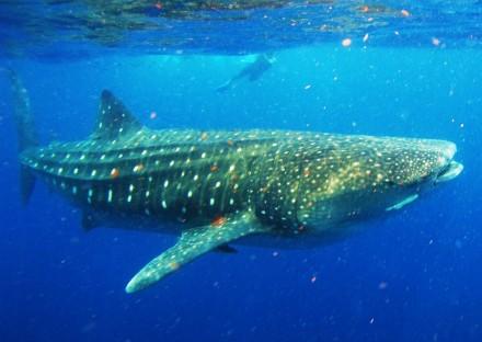 Walhaie Mexico